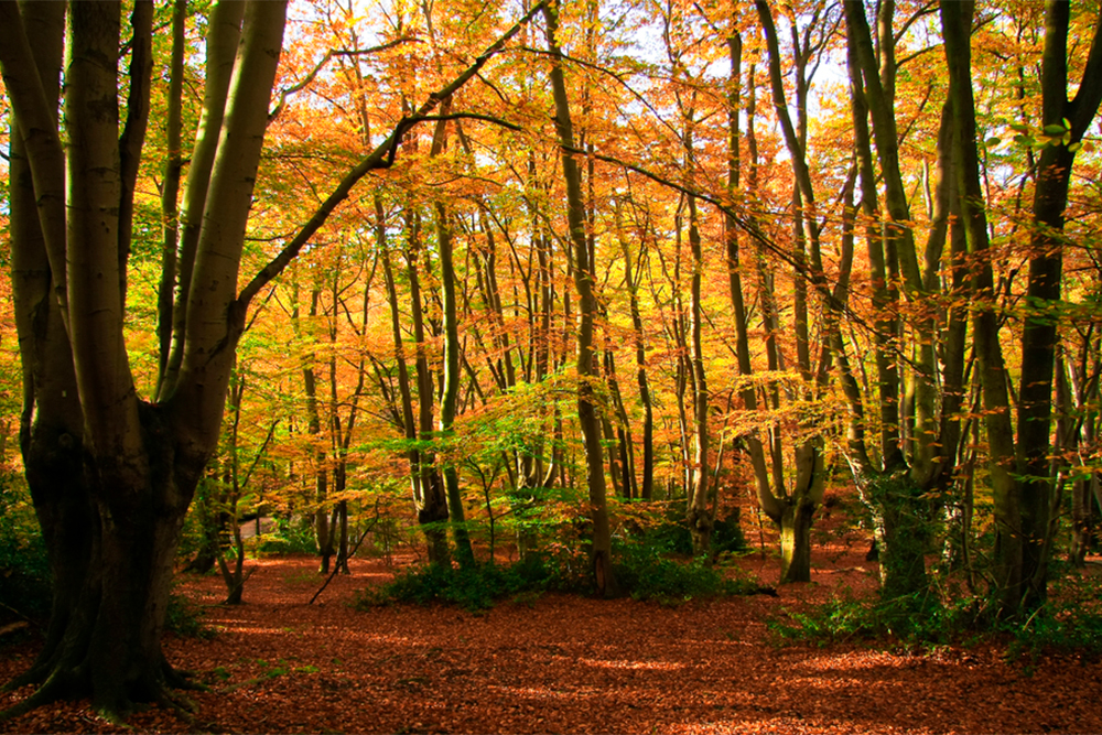 MindMojo Moments — Woodland Walk & Meditation - Saturday 26 October 2019 — Epping forestEnjoy Autumn in all its glory in Epping Forest. Taking a gentle walk through woods and fields, making time to be in 'present moment awareness' we will observe and absorb the glories of this ancient English landscape.Find out more