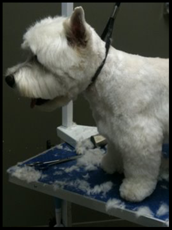 Tailspin dog grooming and dog spa Toronto