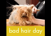 Bad Hair Day.  Full spa service which includes a bath & blow out, cut & styling, nail trim, ear cleaning, &  pawdicure  treatment.