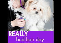 Really Bad Hair Day.  Includes all of the services listed for a Bad Hair Day,  PLUS  extra de-matting  AND  an aromatic coat treatment.