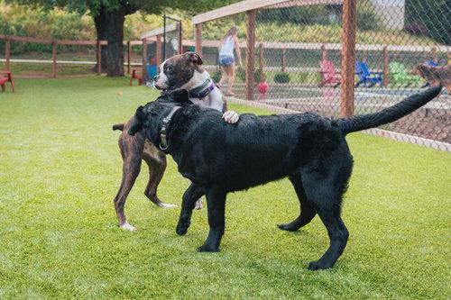 Canine Life & Social Skills   SIX WEEK COURSE   $80