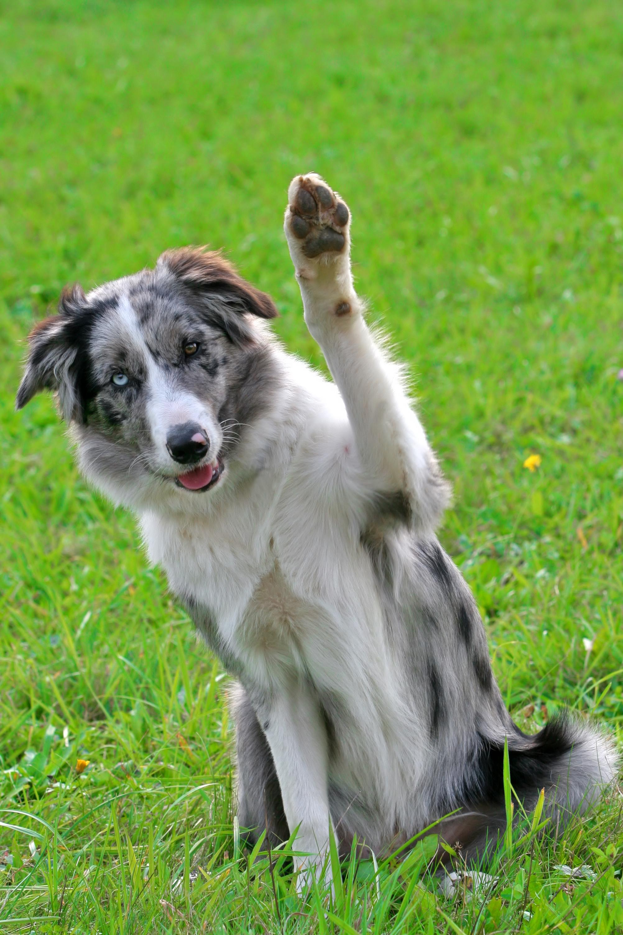 Good dog! Intermediate   INDIVIDUAL CLASSES   *Price Varies