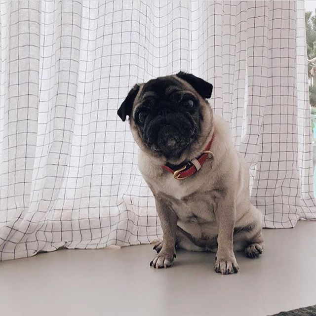 #rockpaperfrida is rocking our Kastellet collar in rose on #pinkwednesday 🎀 @rockpaperdresses