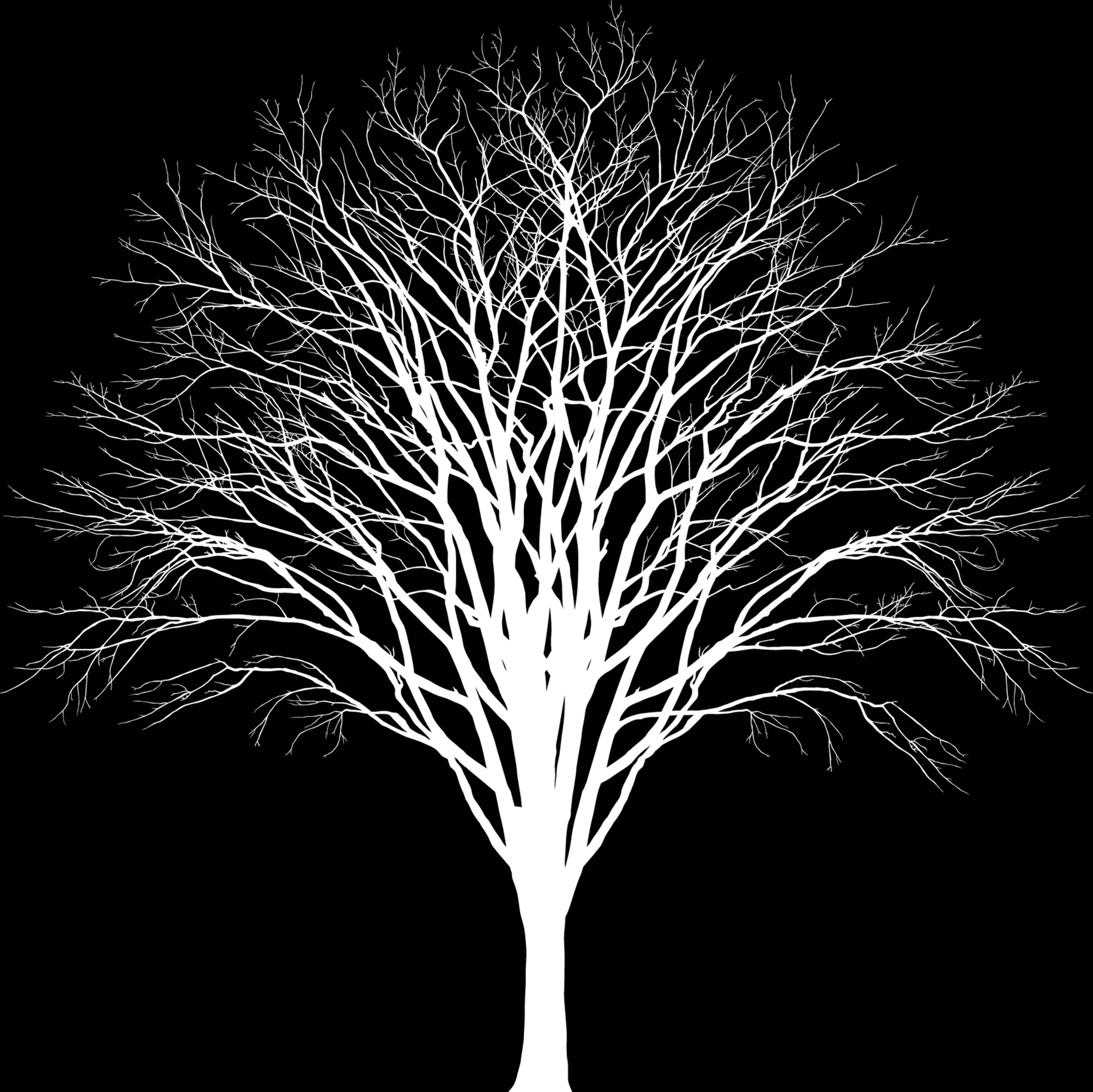 white tree.png