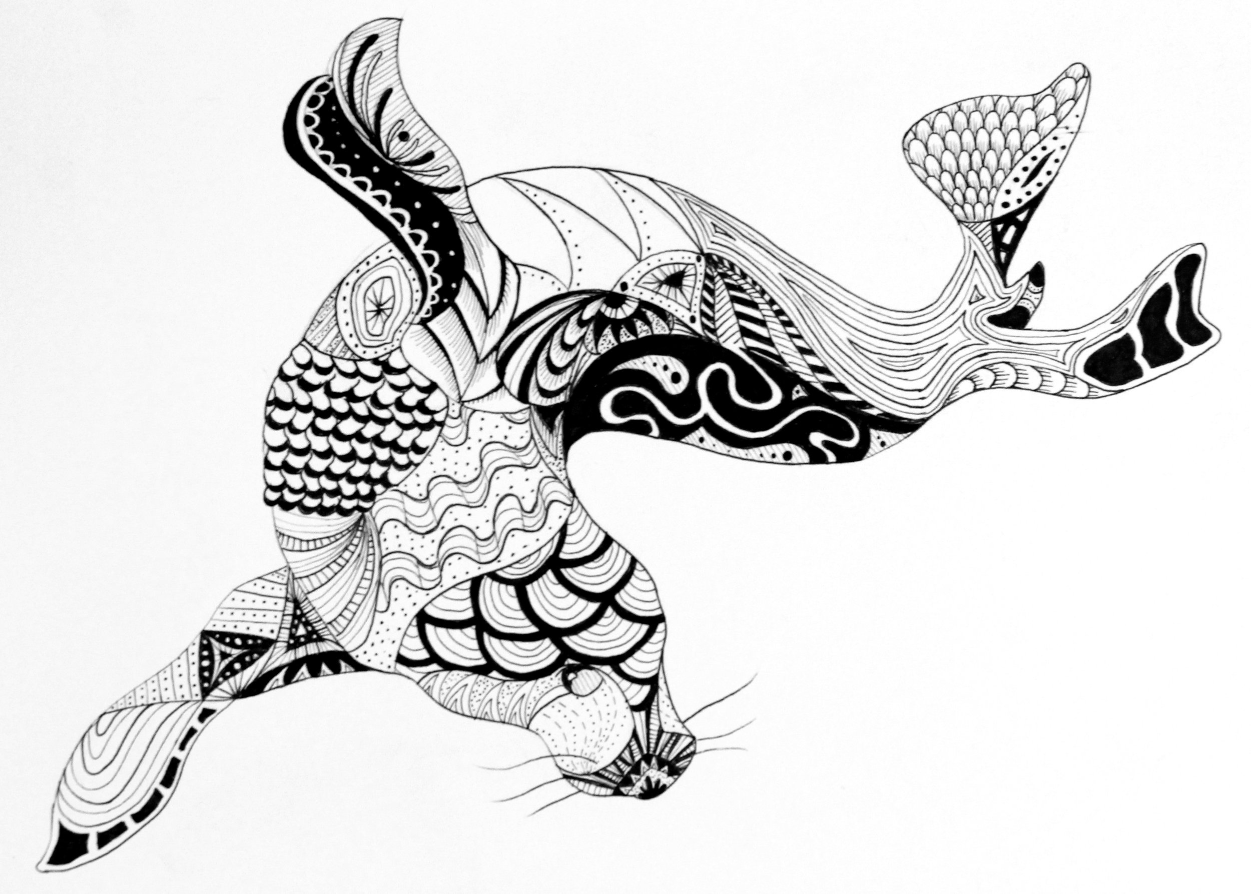 Zentangle Animal Series - Seal (marker on 9x12 paper)