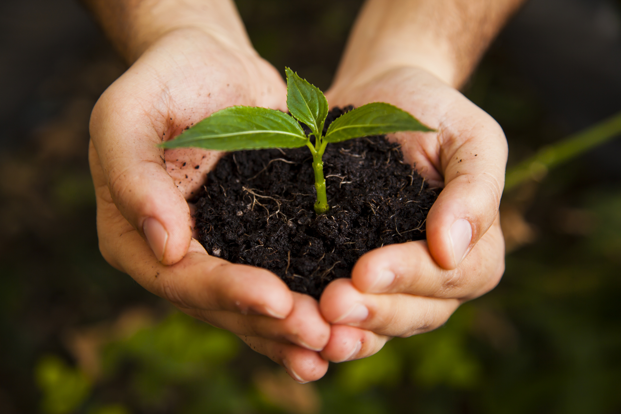 Plant A Tree Program