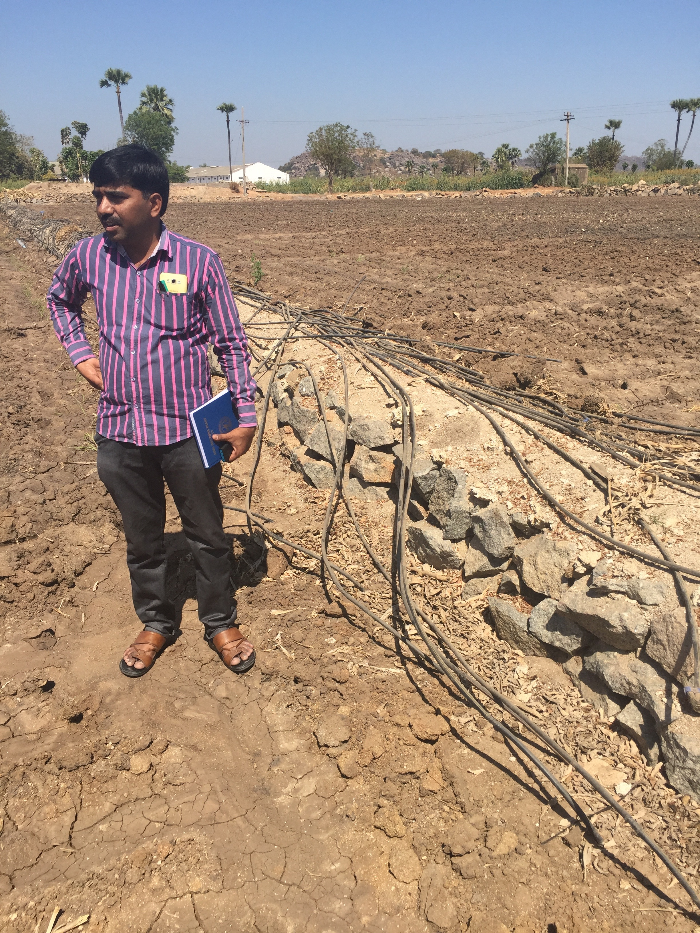 Drip-irrigation tubing for horticultural crops is collected on the edge of the field pre-season