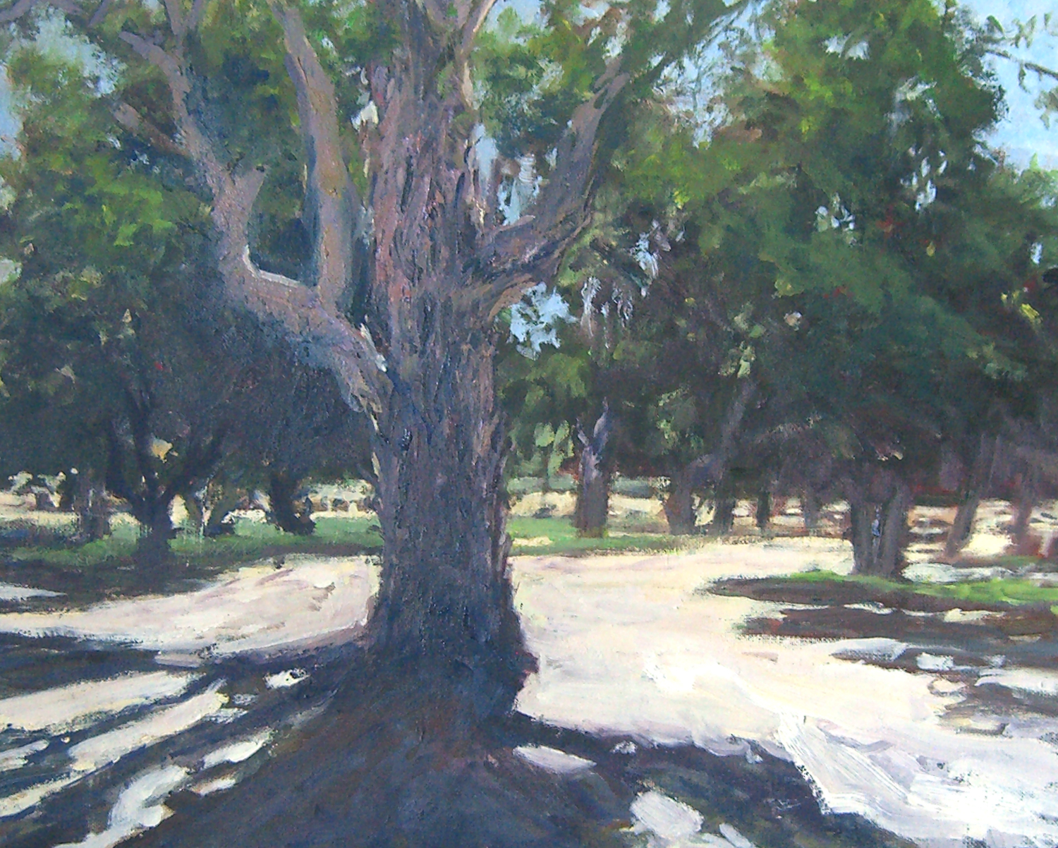 Eucalyptus Grove, oil, 16x20
