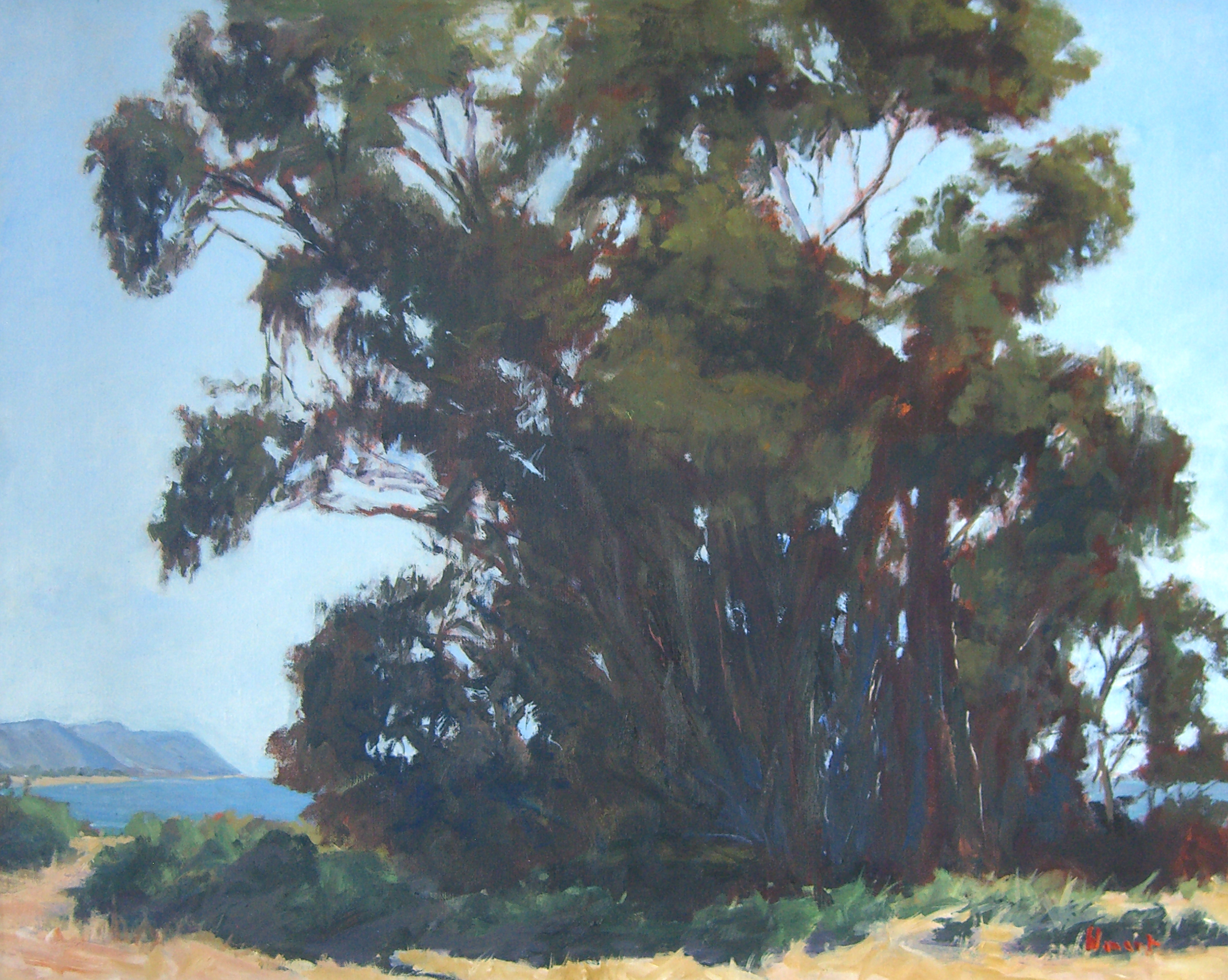 Bluff Eucalyptus, oil, 24x30