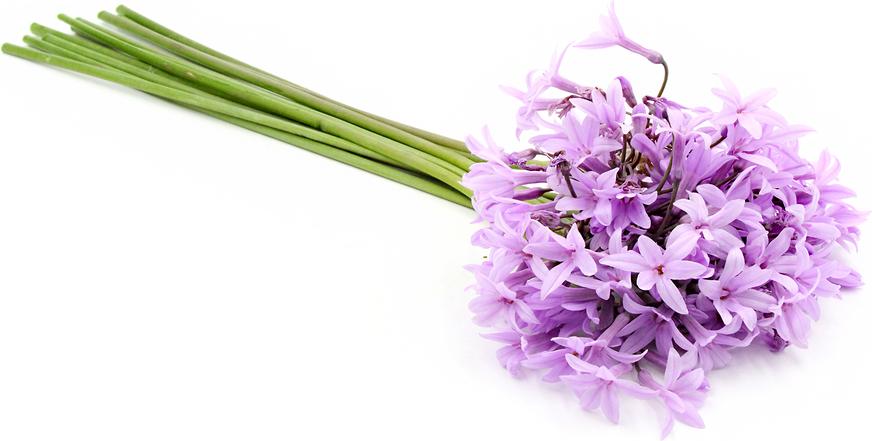 Garlic Flower.png