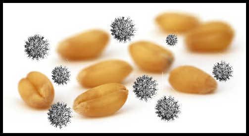 Seed Mixture2.jpg