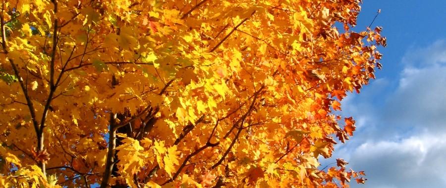 stockvault-autumn-trees122126-900x380.jpg