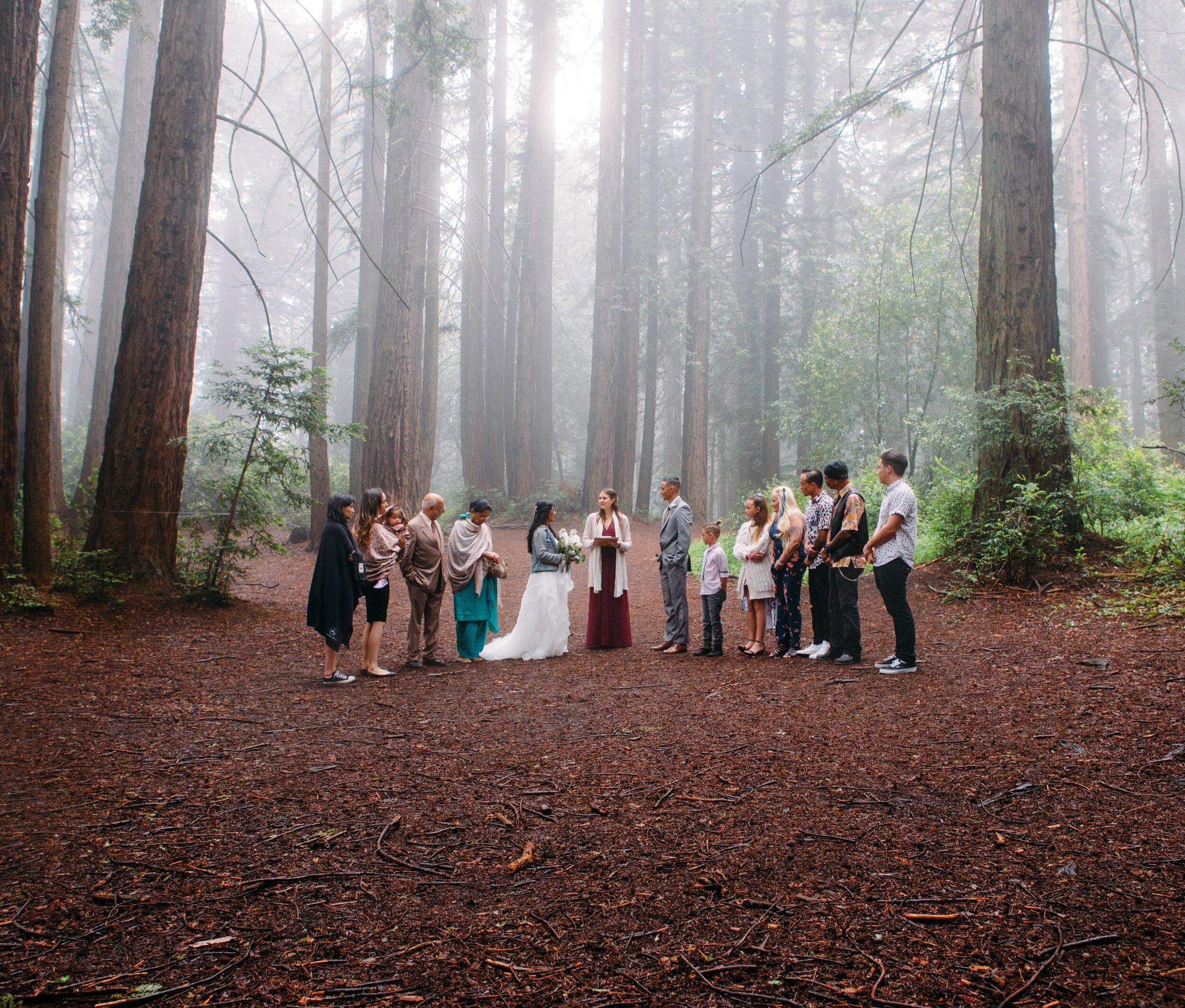 20190615-SanFrancisco-Redwood Regional-Vishali Kameron--14.jpg