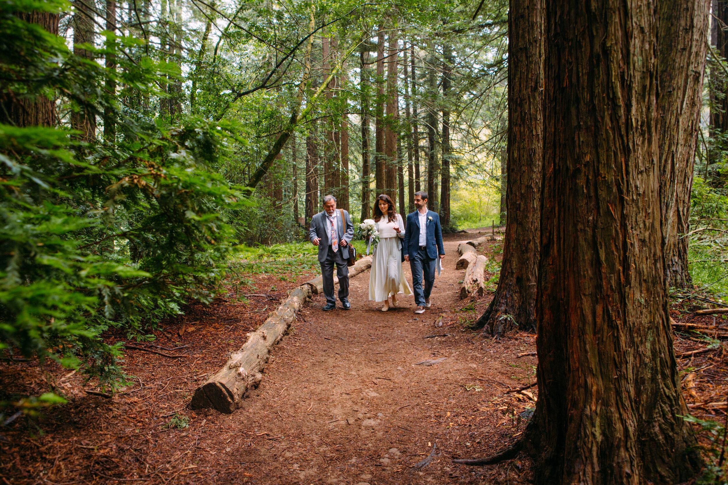 20190716-San Francisco-Redwood Regional Park-Marcella Daniele--3.jpg