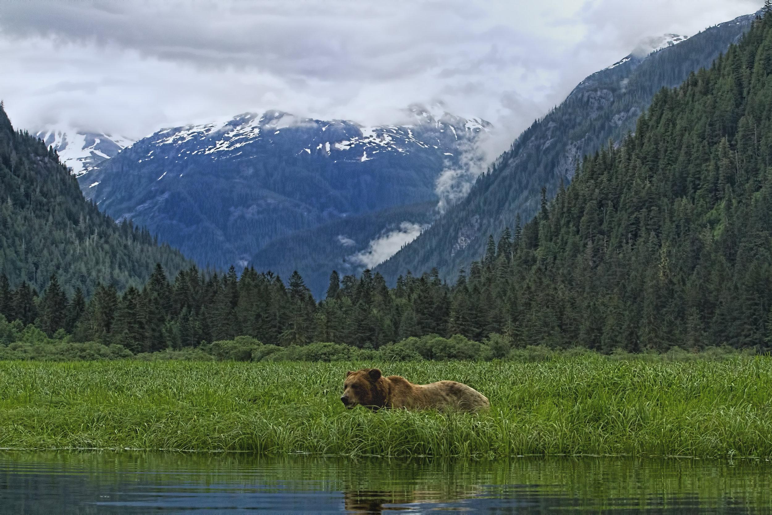 Bears of British Columbia