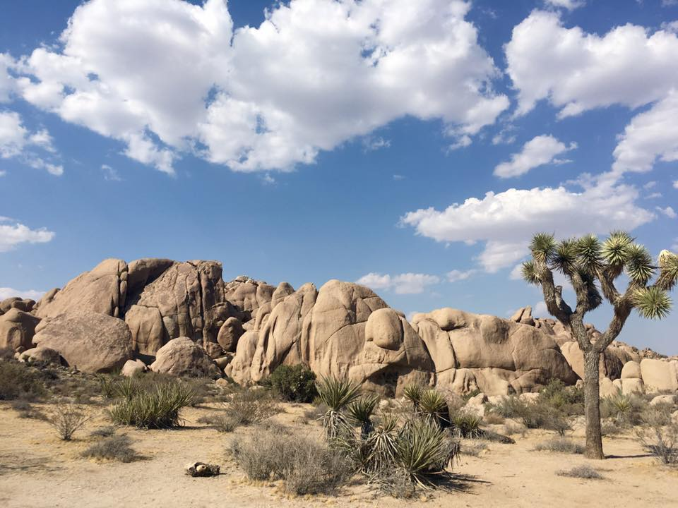 joshua-tree-national-park.jpg