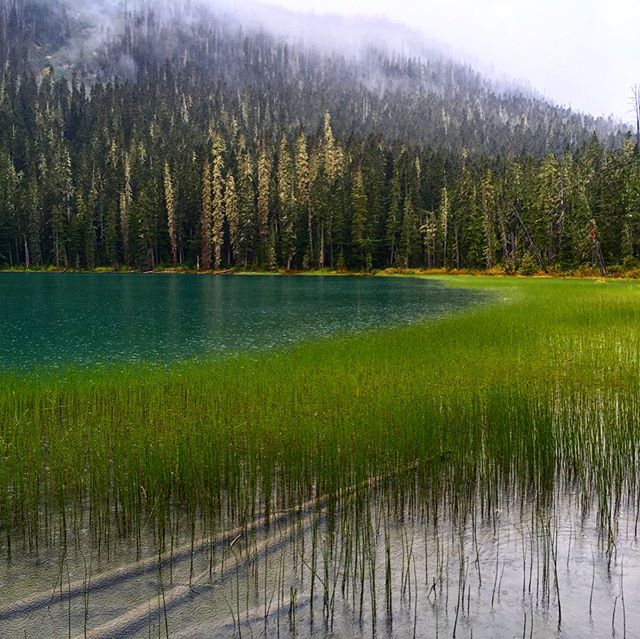 Siamo una minoranza d'indesiderati che ululiamo nella foresta.  #lowerjoffrelake #canada #britishcolumbia #joffrelakes #lake #explorebc #nature #mountains #joffrelake #forest #travel #joffrelakesprovincialpark #ohcanada #naturephotography #hiking #landscape #adventure #bc #roadtrip #lakes #beautifulbritishcolumbia #explorecanada #landscapephotography #mountain #joffrelakeprovincialpark #lowerjoffre #trees #wilderness