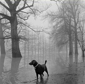 DOG IN THE FOG