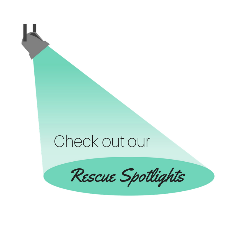 Rescue Spotlights button.png