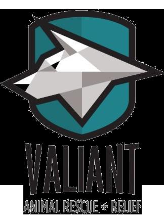 valiant-3.png