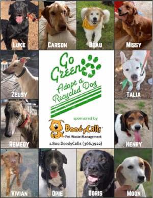 Example of sponsored dog ads