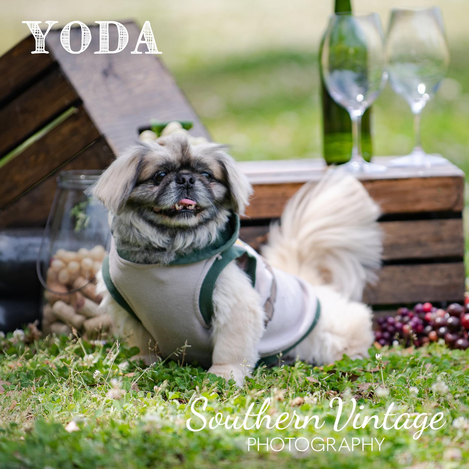07_Yoda.jpg