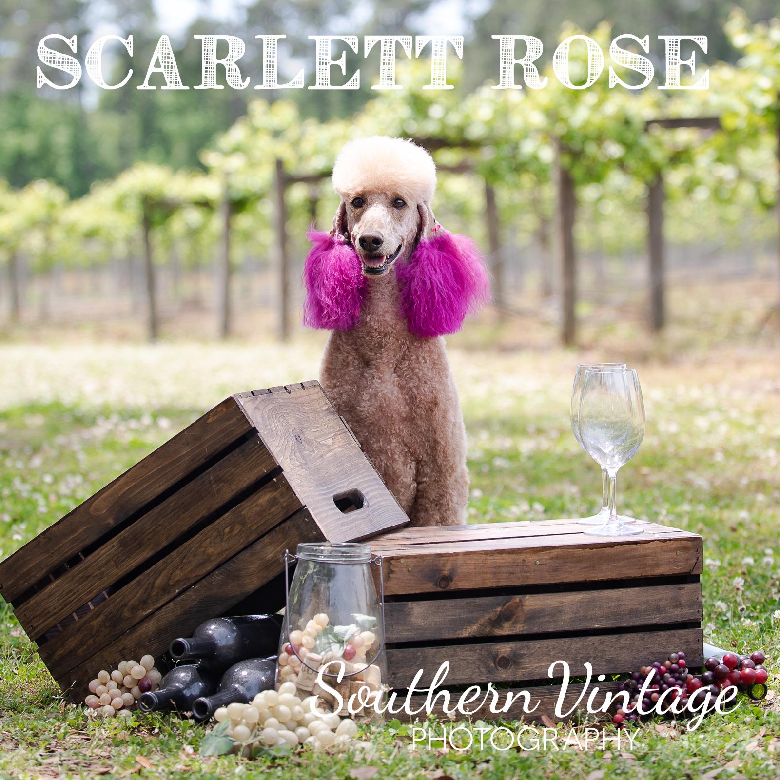 14_ScarlettRose.jpg