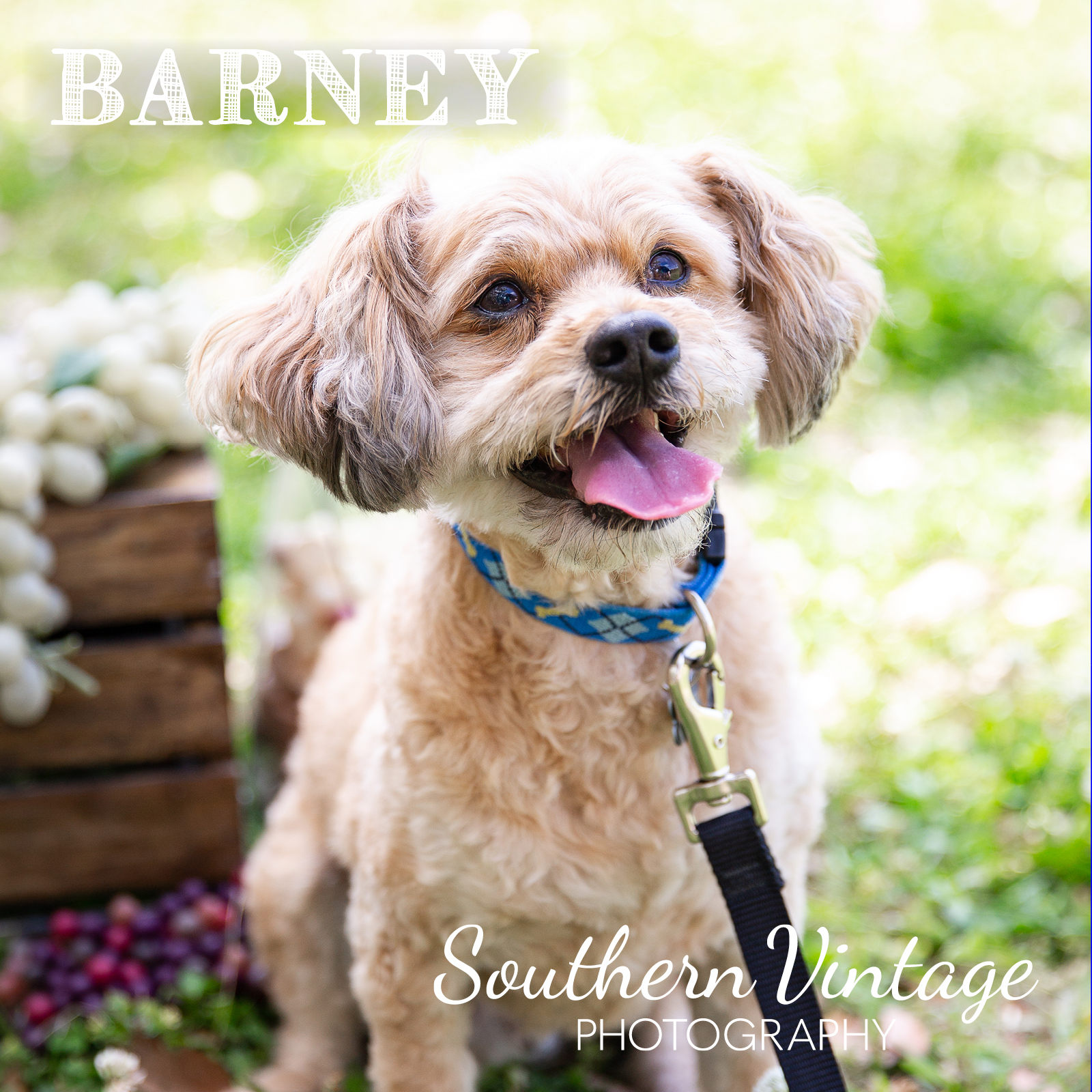 17_Barney.jpg