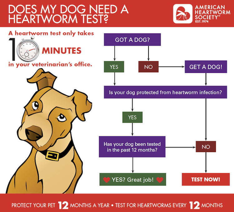 when-to-do-a-heartworm-test.png