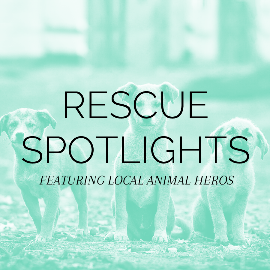 RESCUE SPOTLIGHTS.png