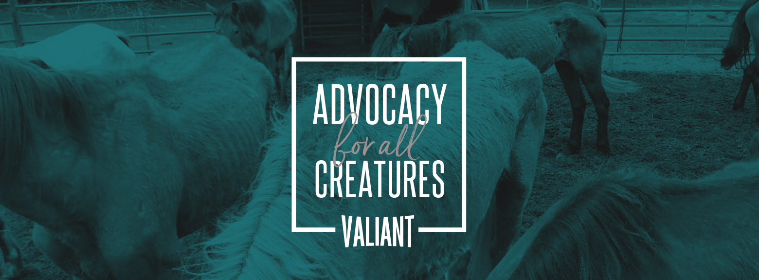 Advocacy for all creatures.jpg
