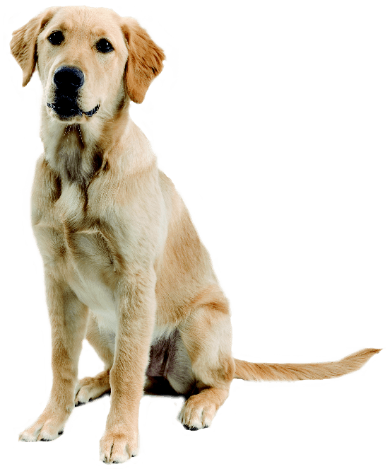 52-dog-png-image-picture-download-dogs.png