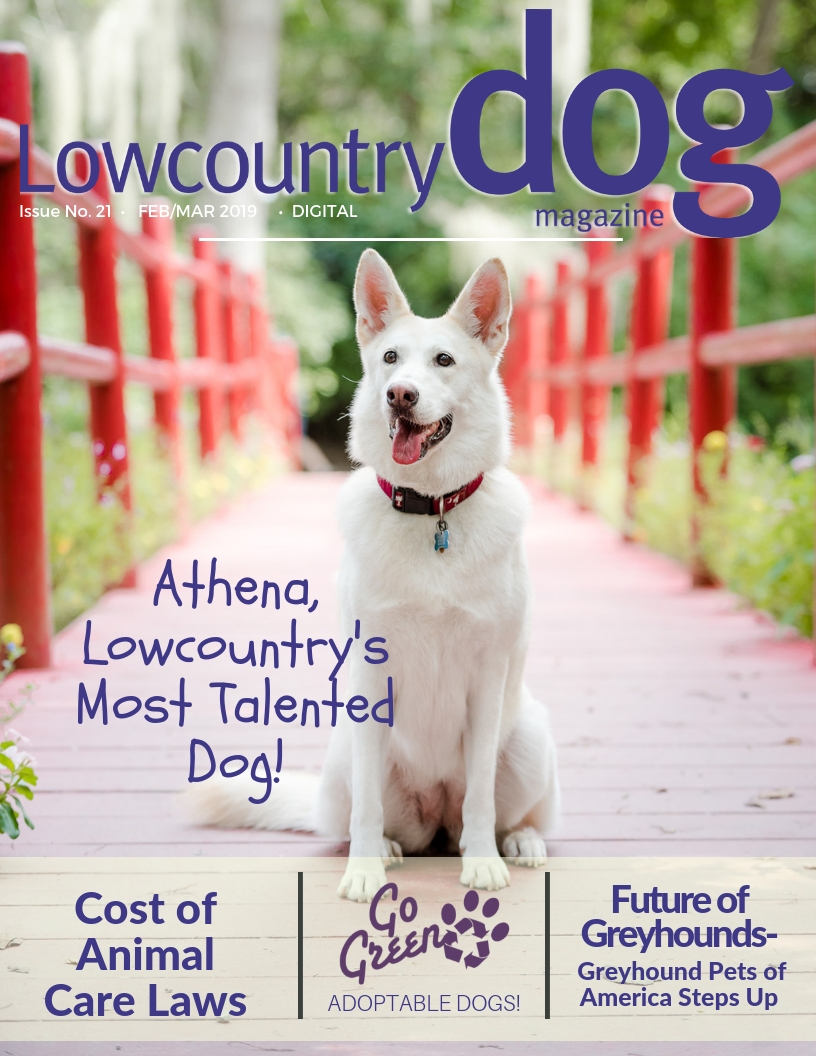 Originally published in the Feb 2019 issue of Lowcountry Dog.