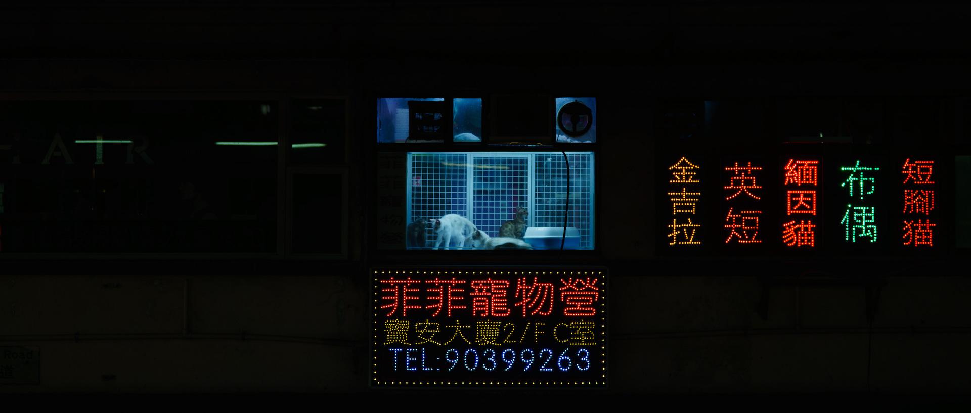 180911_114112_ProbablyJoel_HK-ON_1963.jpg