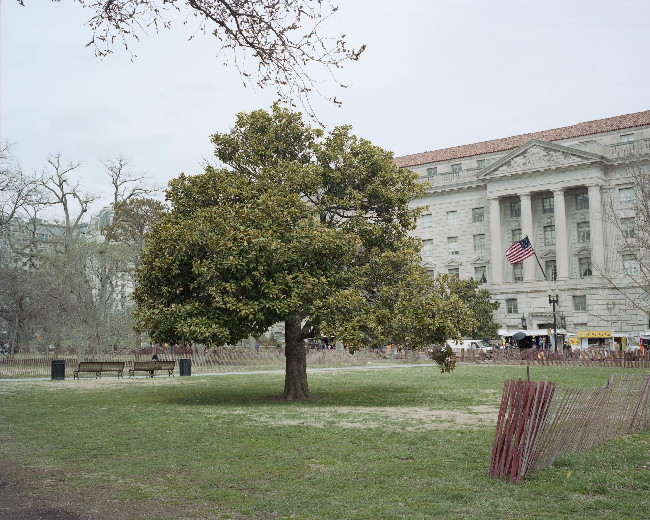 tree DC_w.jpg