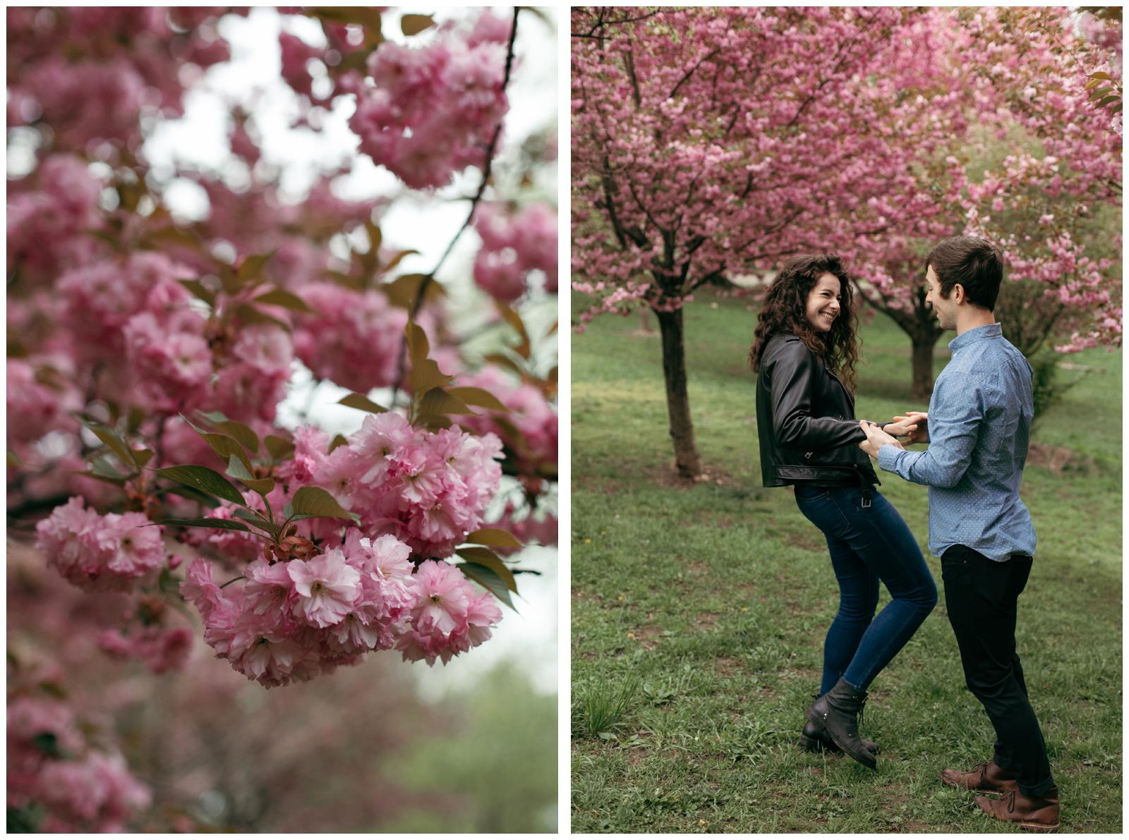 cherry blossom portraits NYC