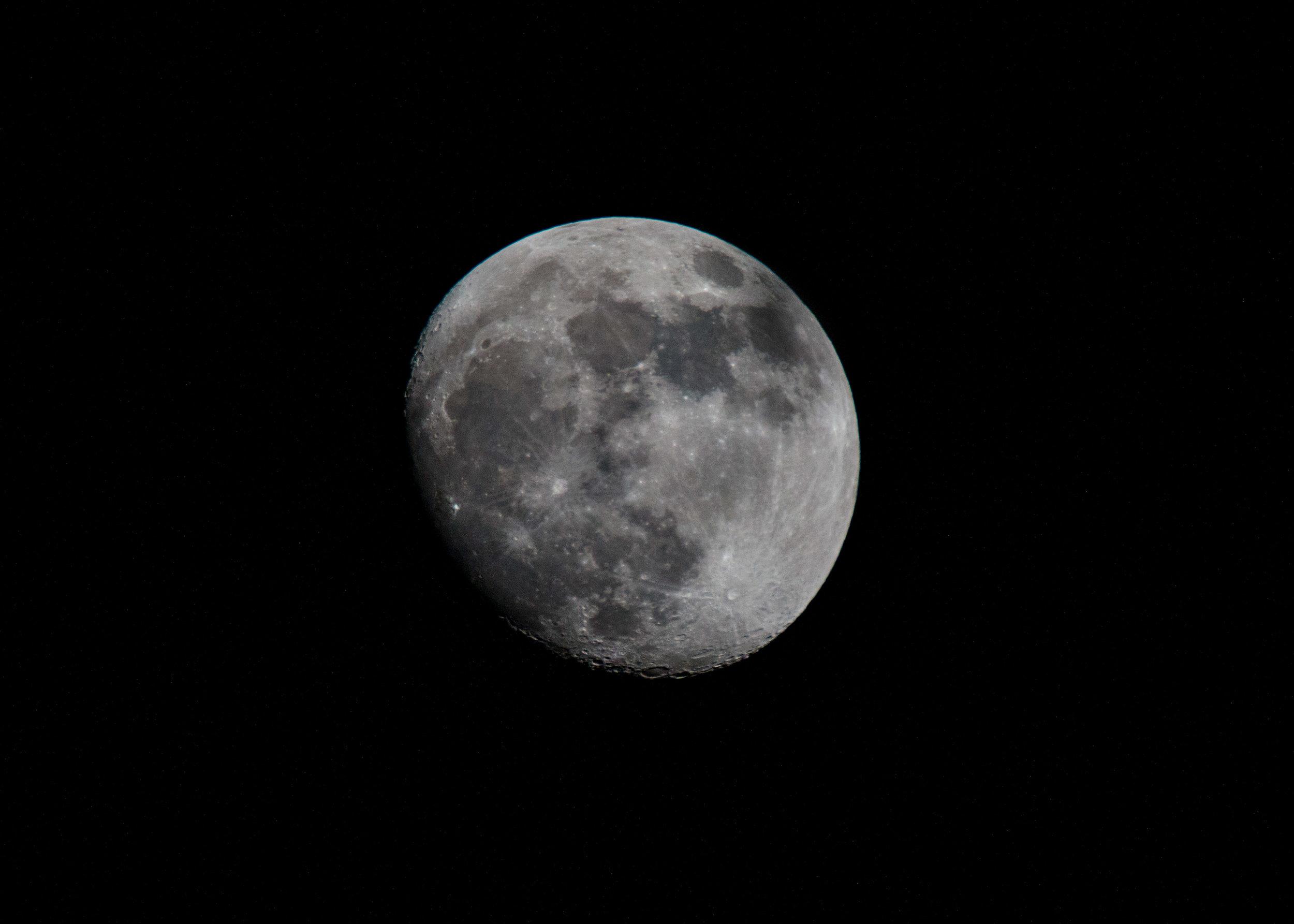 luna (1 of 1).jpg