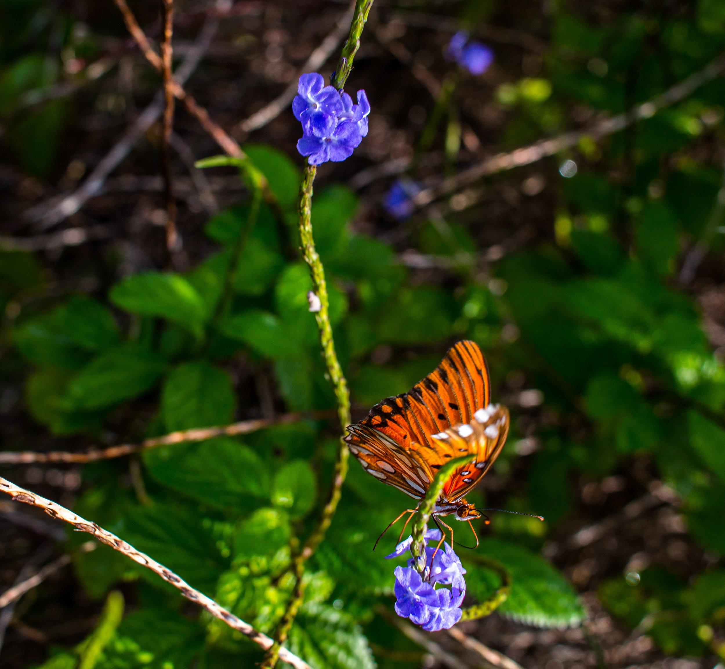 butterfly (1 of 1).jpg