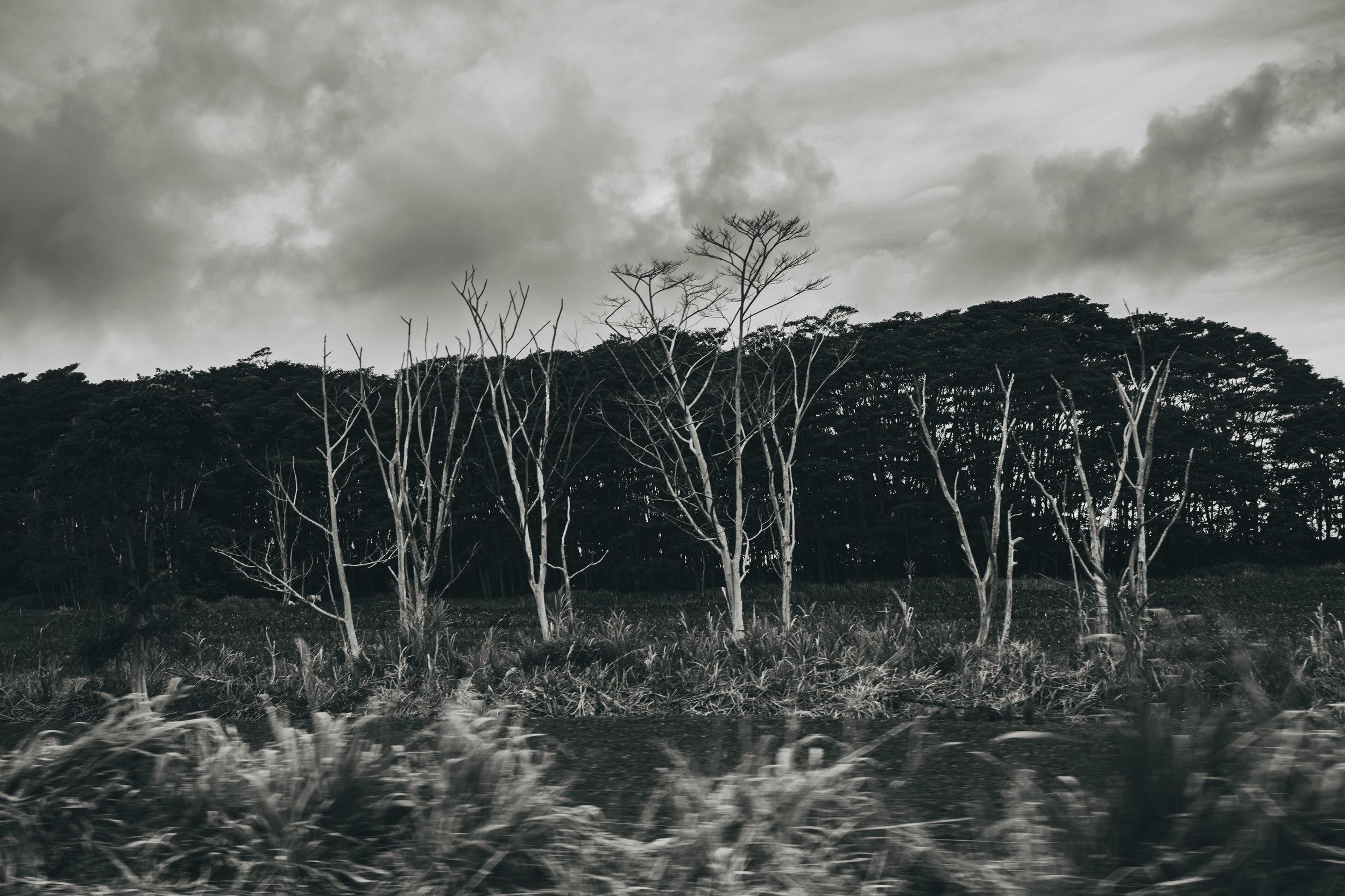 BARE TREES (1 of 1).jpg
