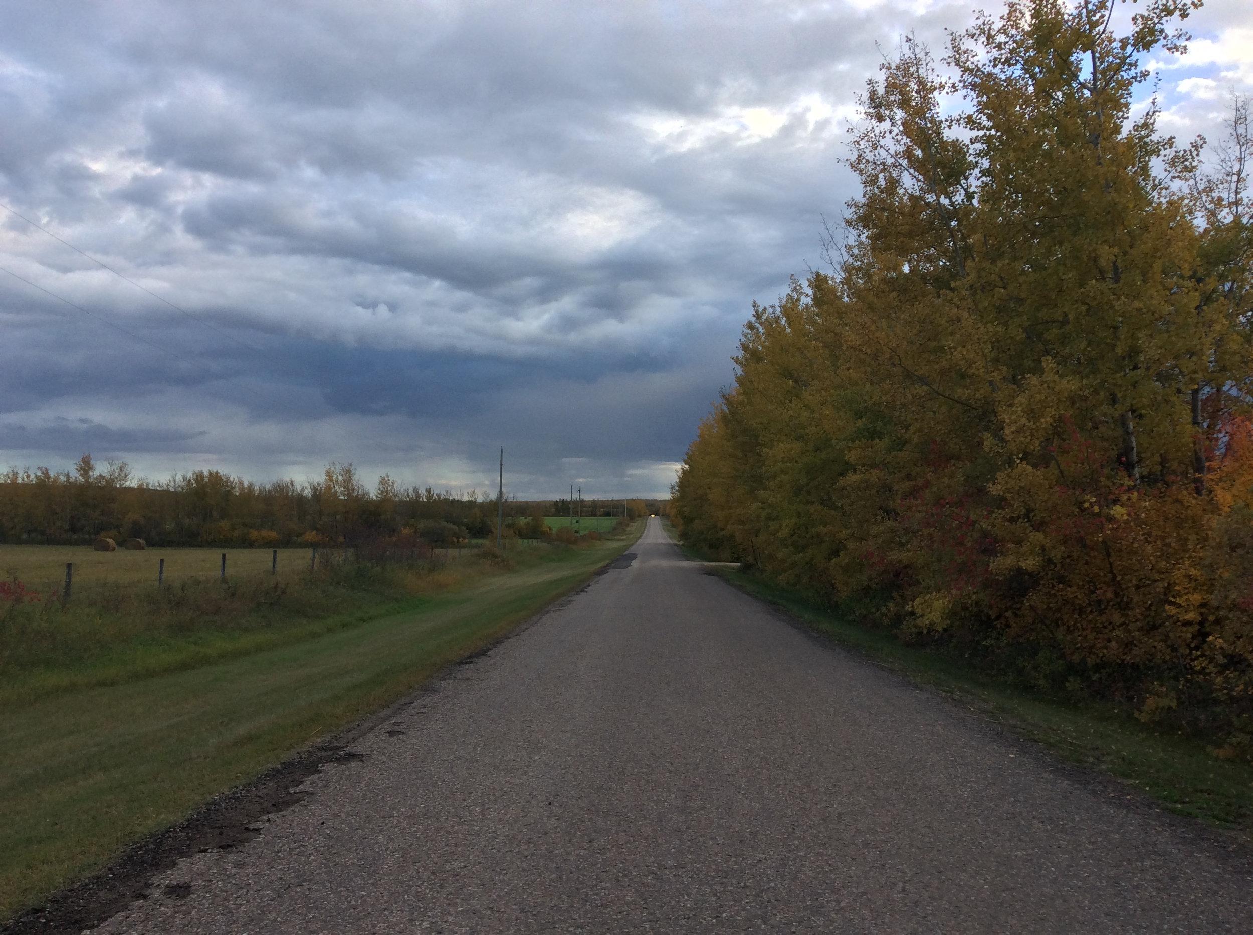 Looking south on the road near E-Tree Farm (Range Rd 414)