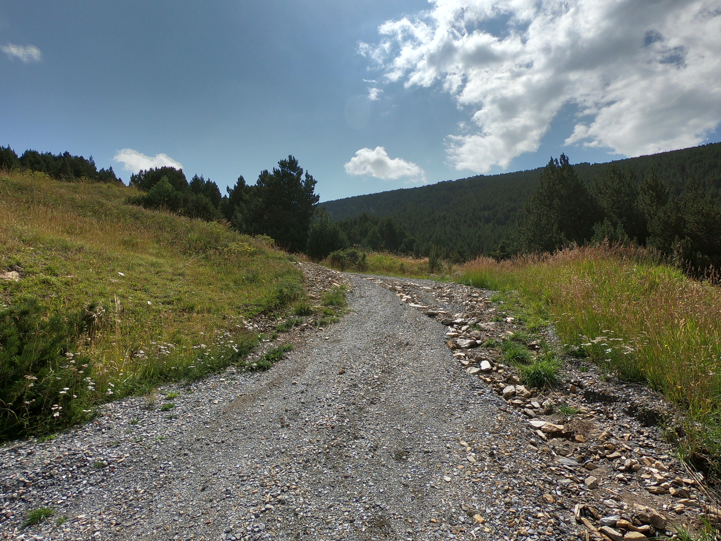 Gravel road (ski run in winter). This is about 3 km into the race.