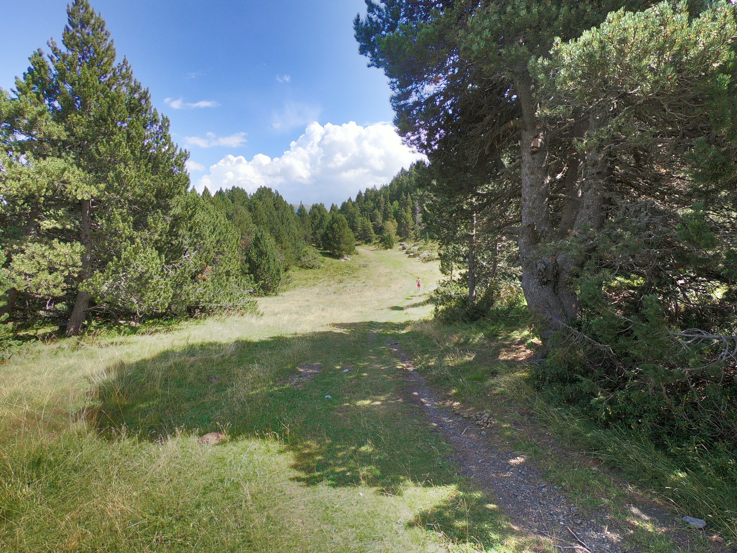 This is the wide grassy trail, which starts at about km 8. Mostly downhill until the Ribaescorxada refuge at 9.2 km into the race (feed stop 2).