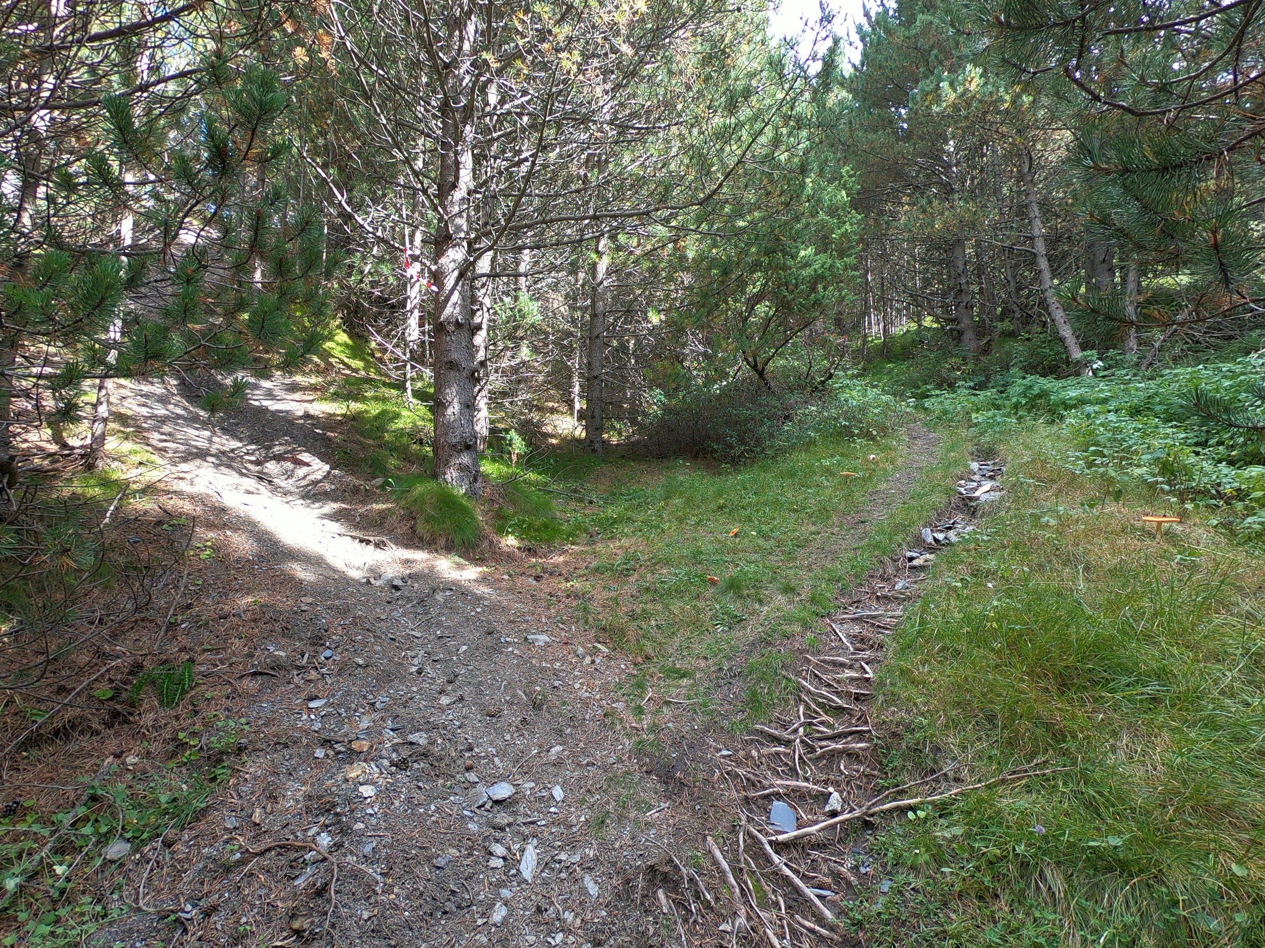 Take the left fork and go up a steep single track.