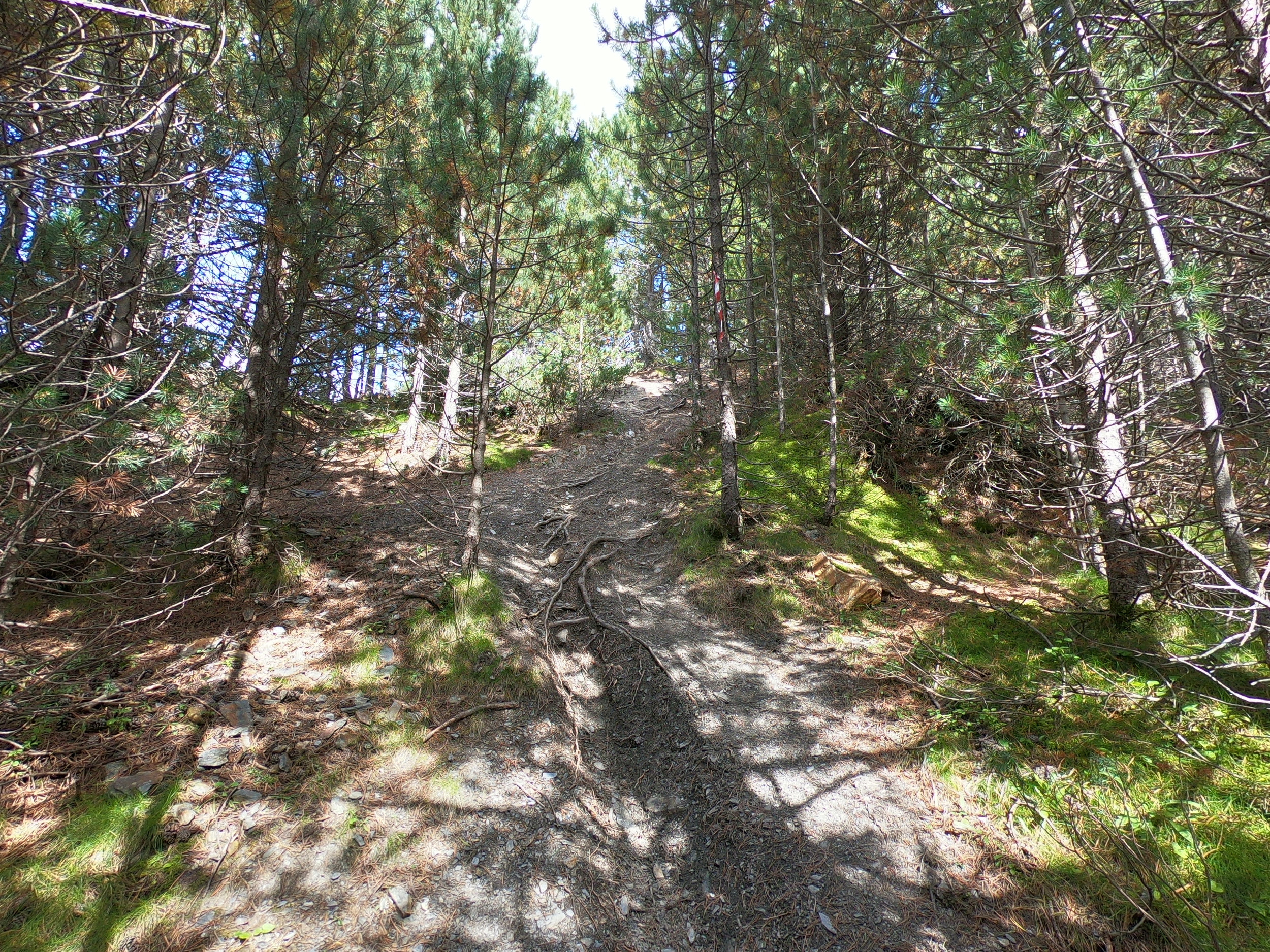 Steep Singletrack.jpg