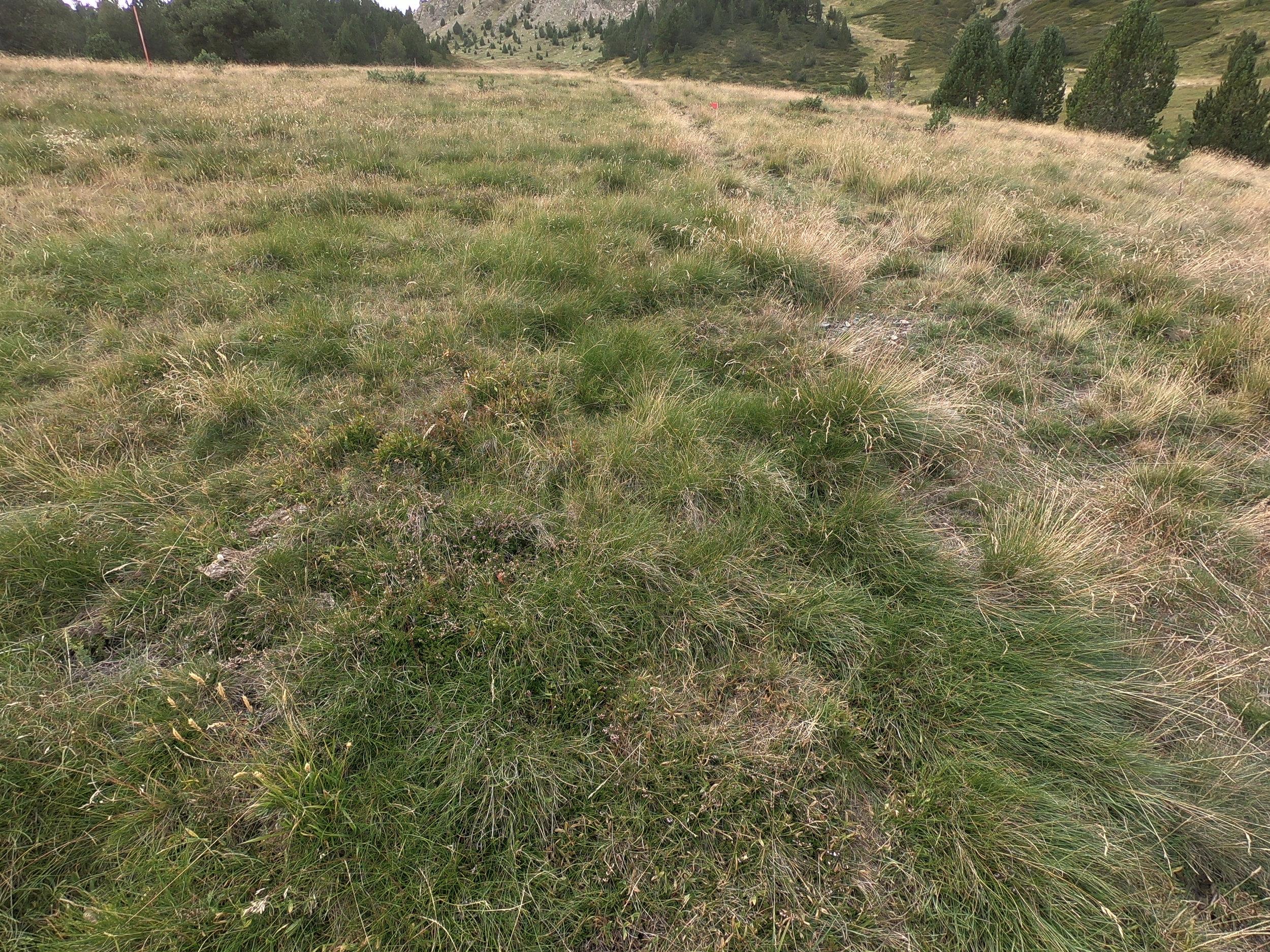 Grass Slope Course.jpg