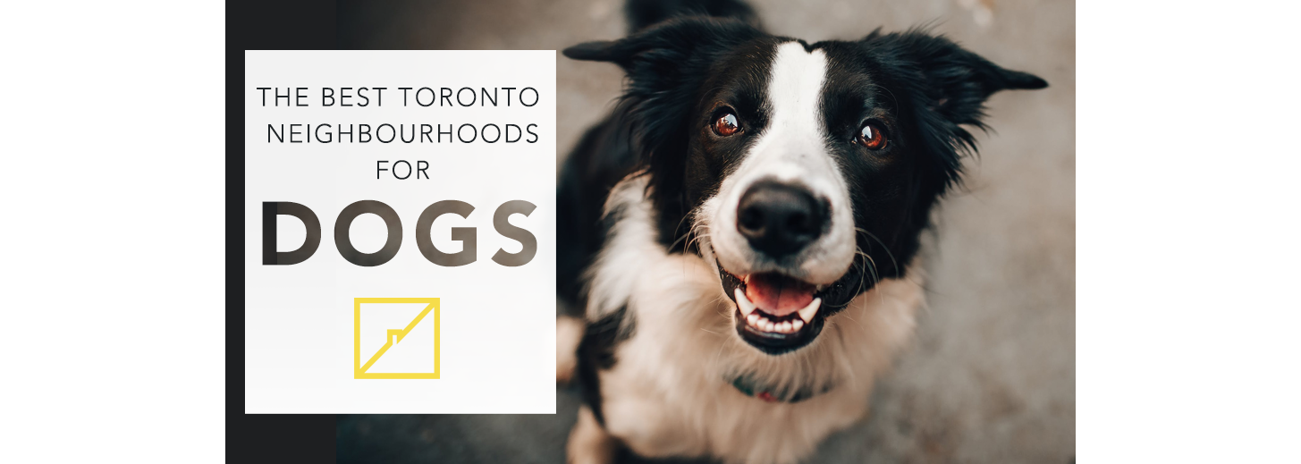 torondo best neighbourhoods for dogs banner.png