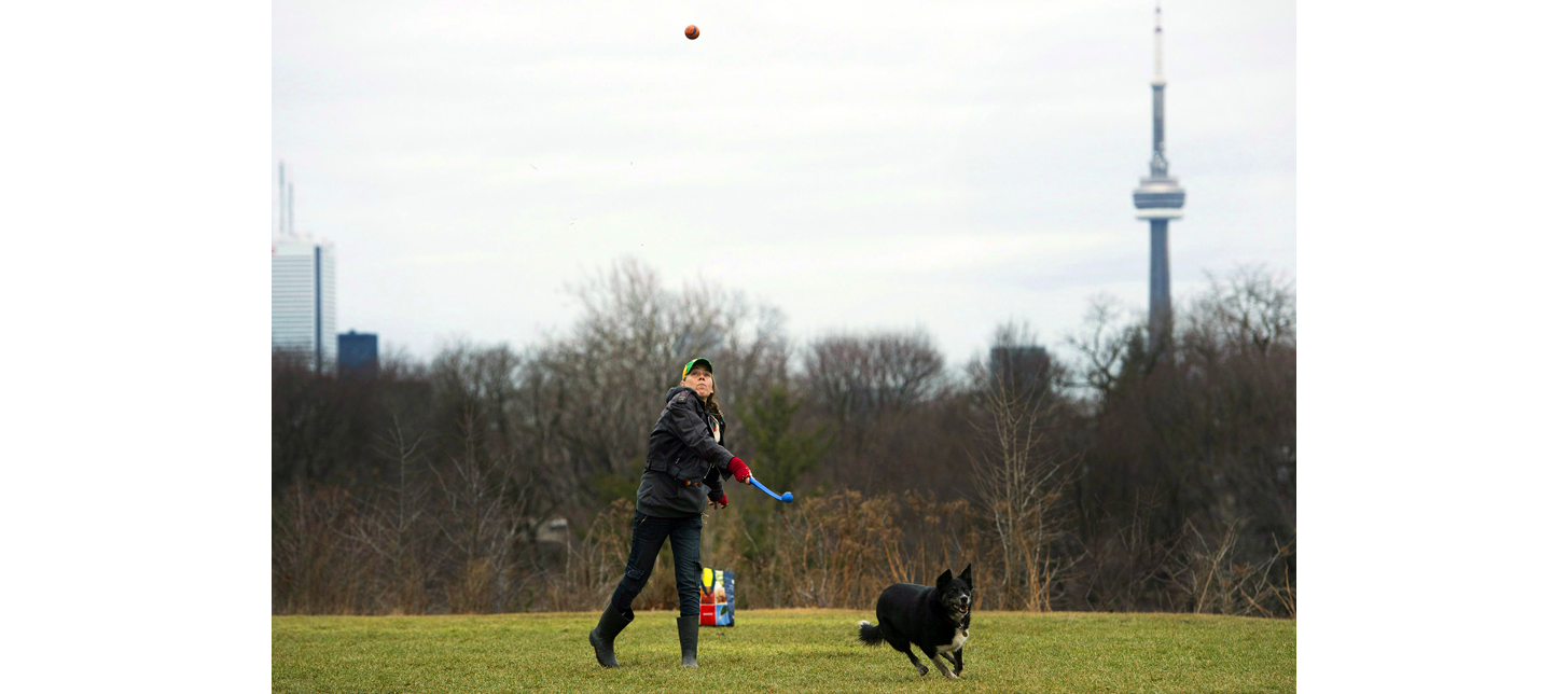 torondo best neighbourhoods for dogs play.png