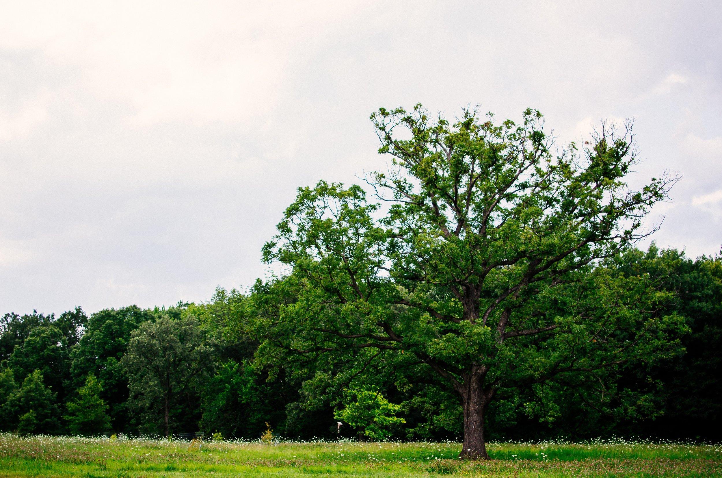 Arboretum Fields.jpg
