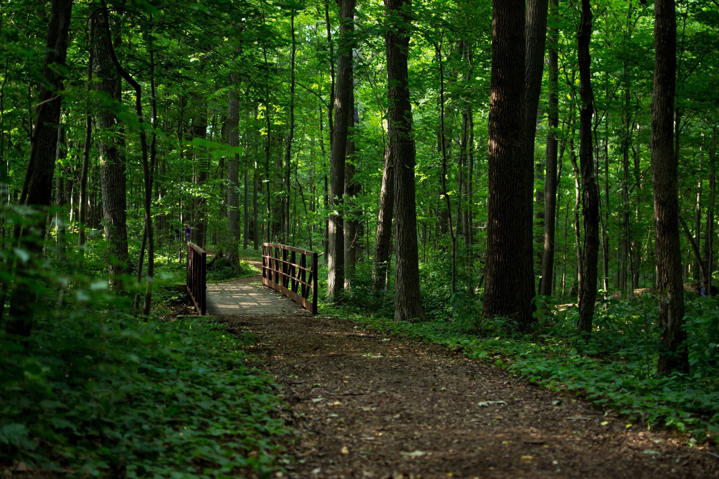 Arboretum Paths.jpg