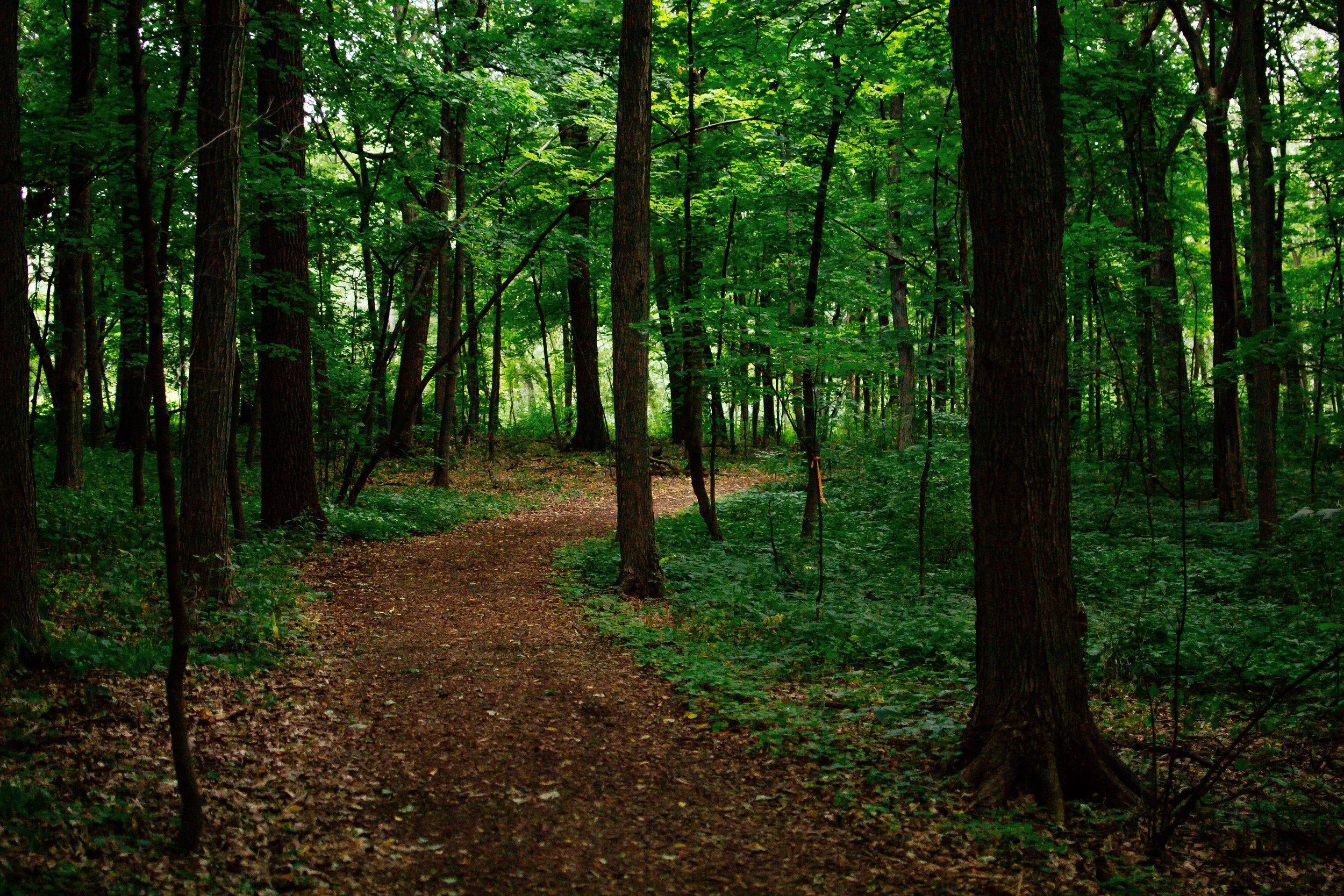 Arboretum Trails.jpg